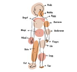 Illustrasjon av en kropp med piler til de ulike kroppsdelene.